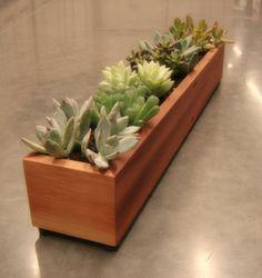 Long Window Succulent Planter in Solid Cedar
