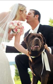 Dogs at weddings - this looks a happy chappie. Accompanies an article on why dogs make perfect wedding guests! Perfect Wedding, Our Wedding, The Wedding Singer, Wedding Inspiration, Wedding Ideas, Getting Married, Your Pet, Singers, Good Things