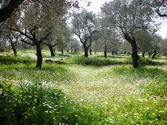 It's spring at Bterram/Koura, Lebanon