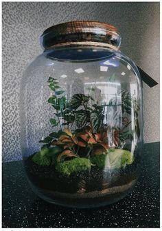 las w szkle Best Terrarium Plants, Terrariums, Ikebana, Horticulture, Concept Art, Jar, Nature, Style Fashion, Instagram
