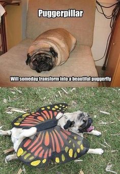 Its a beautiful puggerfly!