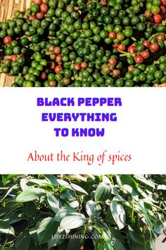 Black pepper everything to know about the King of spices - Lifezshining Black Pepper Plant, Pepper Plants, Cubed Potatoes, Stewed Potatoes, Dried Peppers, Cash Crop, Pepper Powder, Coriander Powder, Sliced Tomato