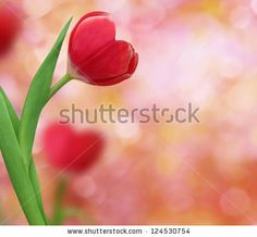 tulip in shape of a heart by LilKar, via Shutterstock