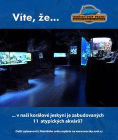 Víte, že... #morskysvet #morskysvetpraha #seaworld #seaworldprague #praha #prague #touristprague #zoo #viteze #ryby #zraloci #koraly #hledasenemo Zoo, Praha, Sea World, Desktop Screenshot