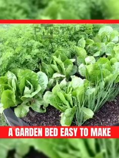 ✔︎ EASY TO SETUP: Just unfold, fill and grow. It is definitely the easiest way to grow vegetables, flowers, herbs and fruits. garden vegetables green houses 🥰🍅My new favorite at home activity! Gardening For Beginners, Gardening Tips, Gardening Supplies, Gardening Books, Flower Gardening, Bucket Gardening, Balcony Gardening, Gardening Magazines, Gardening Courses