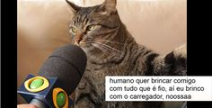 Read Memes As Branquelas² from the story Memes para Qualquer Momento na Internet by parkjglory (lala) with reads. Cat Memes, Funny Memes, Thug Life, Animal Memes, I Love Cats, Funny Photos, Funny Cats, Laughter, Haha