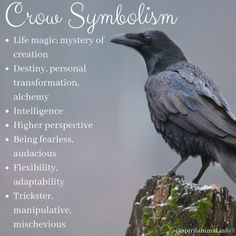 Crow Spirit Animal The crow is a spirit animal associated with life mysteries and magic. The power of this bird as totem and spirit guide is provide insight and means of supporting intentions. Crow Spirit Animal, Animal Spirit Guides, Animal Meanings, Animal Symbolism, Crow Meaning, Crow Tattoo Meaning, Symbol Tattoos With Meaning, Crow Facts, Symbole Tattoo