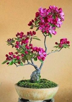 Bonsai tree by Divonsir Borges