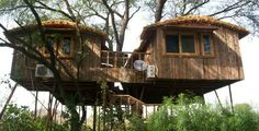 Tree House Resort, Jaipur : The world's largest tree resort of it's kind. Situated on Jaipur Delhi highway - an Eco-friendly project - nature farms. It is a very special home away from home. Equipped with latest and world class amenities, the resort offers a lot more than what you expect.
