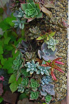 Succulent Post Planter