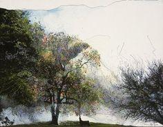 Mary Sprague Tree Drawings