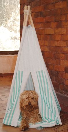 Lupe #australianlabradoodle en su #teepee www.criaderofrankontheroad.com Australian Labradoodle, Hanging Chair, Toddler Bed, Furniture, Home Decor, Hammock Chair, Room Decor, Home Interior Design, Home Decoration