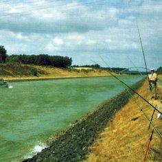 #Mittellandkanal Niedersachsen Westfalen.  Unter den Experten genießt der Mittellandkanal Niedersachsen Westfalen hohes Ansehen, Aale, #Friedfische und Zander werden gefangen  http://www.angelstunde.de/mittellandkanal-niedersachsen-westfalen/