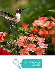 Fine Art Photography, Hummingbird Print, Large Wall Art, Hummingbird Pictures, Ruby Throated Hummingbird, Living Room Decor from Christina Rollo
