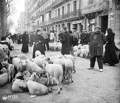 Fira de bens de Pasqua al passeig de Sant Joan de Barcelona, 1915.