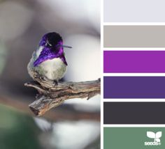 Feathered Hues (photo courtesy ~ design-seeds.com) #FireAndRain #purples