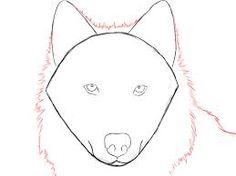 how to draw a wolf face - Google Search