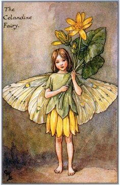 My sweet darling Fairy Vylette, love you, miss you😘💜🌙👼🏼🦄🌺 Cicely Mary Barker, Vintage Flowers, Vintage Fairies, Vintage Art, Vintage Prints, Pixies, Gnomes, Flower Fairies Books, Full Face