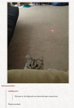 20 Cats and That Ultimate Prey.THE RED DOT! - LOLcats is the best place to find and submit funny cat memes and other silly cat materials to share with the world. We find the funny cats that make you LOL so that you don't have to. Cute Funny Animals, Funny Cute, Cute Cats, Hilarious, Pretty Cats, Crazy Cat Lady, Crazy Cats, Animal Pictures, Funny Pictures