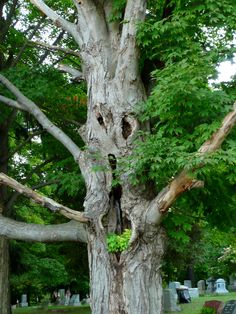 Items similar to Tree Spirit on Etsy Mother Earth, Mother Nature, Magical Tree, Tree Faces, Tree People, Organic Art, Unique Trees, Tree Carving, Bizarre