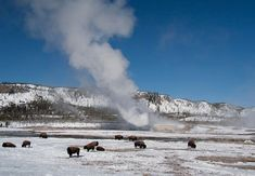 Yellowstone National Park, Idaho, Montana and WyomingYellowstone is a world of superlatives: Americas first national park, with more geysers than the rest of the world combined and the most diverse wildlife in the continental United States. Inexpensive lodging surrounds the park