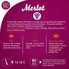 Hoy les tenemos la reseña de un delicioso Merlot! A todos nuestros amigos que gusten de disfrutar este viernes un vino, les recomendamos vayan a disfrutar un Merlot!