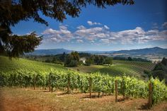 Spring is upon us! Follow us today and plan a visit to Oregon's Washington County, the gateway to Wine Country! pic.twitter.com/mjrHYdQ2j8