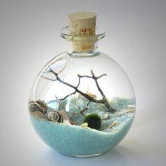 Marimo Bottle Garden Terrarium By Midnight Blossom   Underwater Terrarium  With Living Japanese Moss Ball Sand Pebbles And Black Sea Fan.