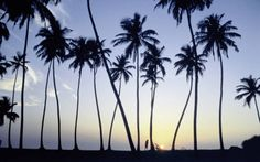 Sri Lanka is a tropical, lush island paradise and one of the top honeymoon locations.  This beautiful part of the world offers stunning sandy beaches, spectacular historic sites and luscious national parks  - See more at: http://www.travelbureaugosforth.com/sri-lanka#sthash.bBRjzgHJ.dpuf