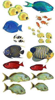 Tropical Fish Assortment  Wall Decals