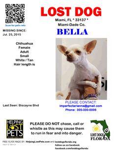 Lost Dog - Chihuahua - Miami, FL, United States