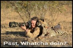 Photographing wildlife. You're doing it wrong