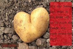 Wie der Same den man in die Erde sät, so ist auch die Ernte, die man erwarten darf. Antiphon #Willensforschung #judith-will.de #Liebe #Ernte