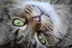 one picture at a time. One Pic, Cats, Pictures, Animals, Life, Photos, Gatos, Animales, Animaux