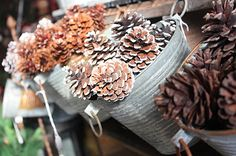 love frosted pine cones for winter decor!