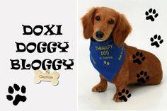 Doxi Doggy Bloggy