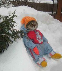Ce chat qui se la coule douce dans la neige.