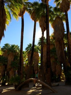 palm_springs_indian_canyons_1