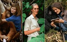 Birute M.F. Galdikas, Jane Goodall, Dian Fossey