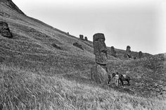 Easter Island Moai. View of the northeast of the exterior slopes of the quarry, with several moai (human figure carving) on the slopes; a young South American man with a horse is standing in the foreground next to one of the moai carvings, as a scale, Easter Island, photograph, 8.2 x 8.2 cm  © The Trustees of the British Museum