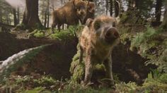 ZUBR Boars from Platige Image