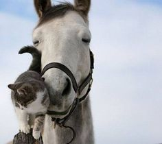 Horse and kitty.../ The horses eyes say it all, 'My Sweet Kitty.'