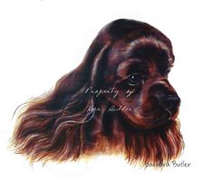 Print of Painting Cocker Spaniel Chocolate Headstudy Signed by Barbara Butler | eBay