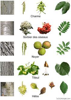 Cactus Plants, Garden Plants, Visual Perceptual Activities, Provence Garden, Tree Leaves, Botanical Flowers, Bushcraft, Architectural Plants, Montessori