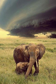 Unusual to see a wall cloud where elephants dwell in Africa