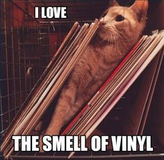 33 rpm Vinyl LP Albums at their best! Our assortment of Vinyl Records includes a very diverse collection, some of which are very rare. Vinyl Cd, Vinyl Music, Vinyl Records, Vinyl Room, Dream Music, Music Is Life, Musician Jokes, Vinyl Quotes, Dj Quotes