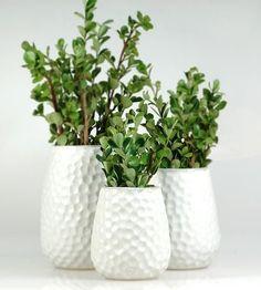 Bildergebnis für weisse vasen sukkulenten