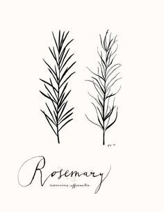 Rosemary+85x11+Culinary+Art+Collection+by+evajuliet+on+Etsy