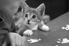 Katzenbilder, Bilder von Katzen- Babys,