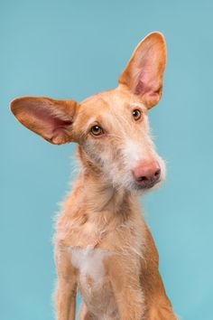 """Without a doubt the cutest ears ever - For licensing requests:  info@elkevogelsang.com <a href=""""https://www.facebook.com/elke.vogelsang/"""">FACEBOOK</a> 